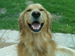 dog_smiles
